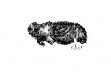 Self-Titled Debut EP by Kagu