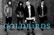 "Goldbirds – ""Giving Up"""