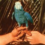 andrewbird